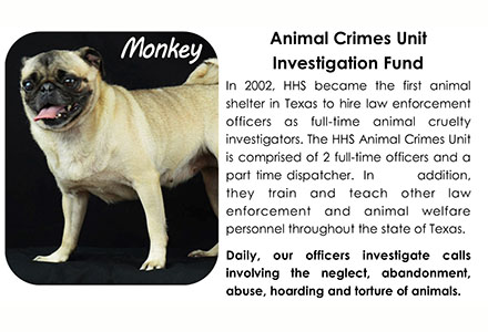 Animal Cruelty Investigations Houston Humane Society