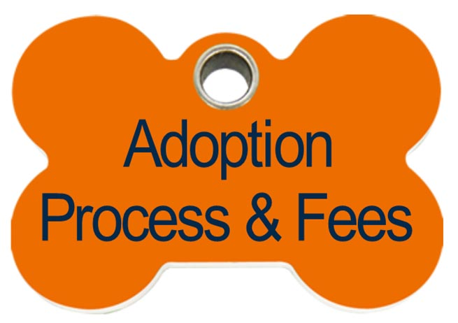 adoption-process-and-fees