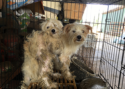 Houston Humane Society HHS rescues nearly 300 animals from Grimes County property