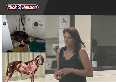 Houston Humane Society Bella Update: Two Charged with Abandonment