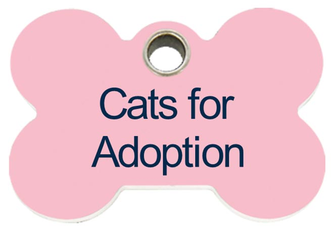 cats-for-adoption