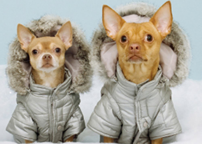 Houston Humane Society Cold Weather Pet Safety Tips