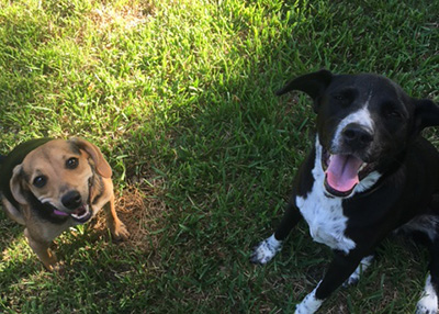 Houston Humane Society Happy Tail Cosita and Oreo