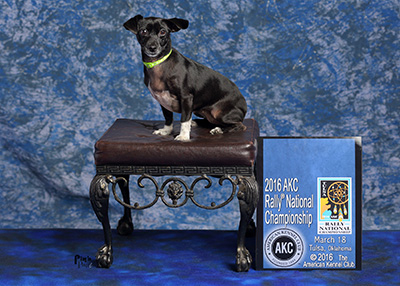Houston Humane Society Happy Tail Tinker Bell