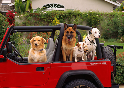 Houston Humane Society - Jeepers for the Paws