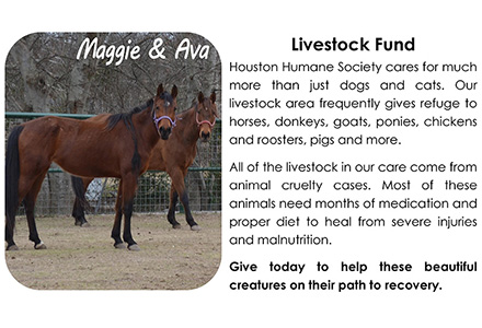 Livestock Fund Houston Humane Society
