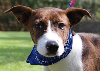 Houston Humane Society Beatrice