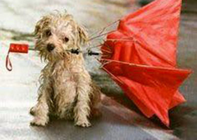 Houston Humane Society Rainy Weather Tips