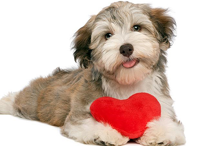 Houston Humane Society Valentine's Day Safety Tips