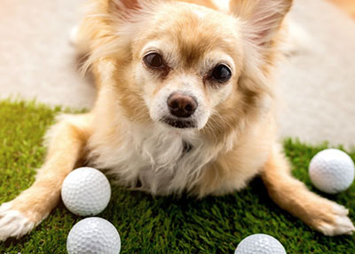 Houston Humane Society - 28th Annual Par Fore Pets