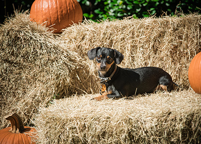 Houston Humane Society Fall Festival 2018