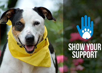Show Your Support Houston Humane Society