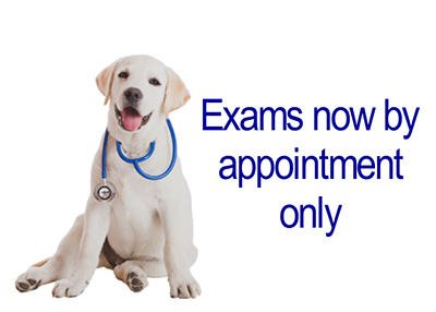 Houston Humane Society Exams By Appointment Only