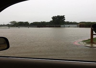 Houston Humane Society Hurricane Harvey Update - 8/27