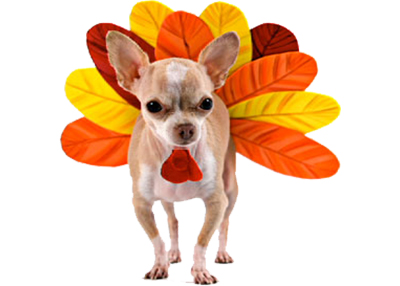 Houston Humane Society Thanksgiving Pet Safety