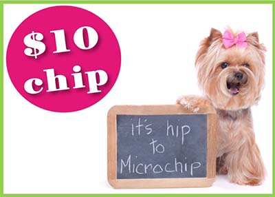 Houston Humane Society - $10 Microchip Special