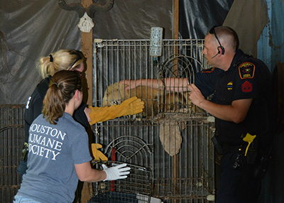 Houston Humane Society Spring Seizure