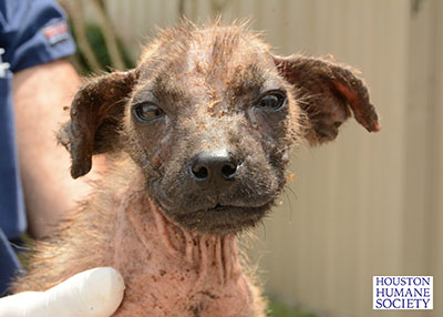 Houston Humane Society Animal Cruelty Seizure