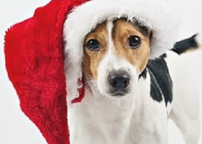 Houston Humane Society - Pawlidays @HHS Pavilion