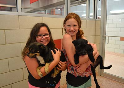 Houston Humane Society - Companion Camp