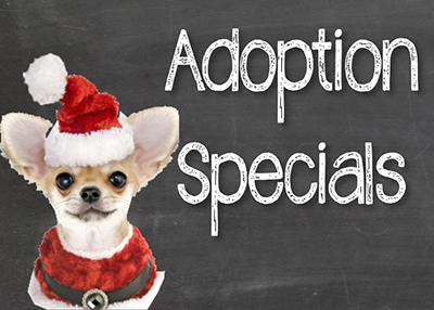 Houston Humane Society - December Adoption Promotion