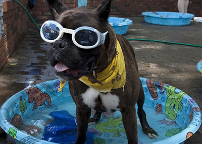 Houston Humane Society Beat the Heat!