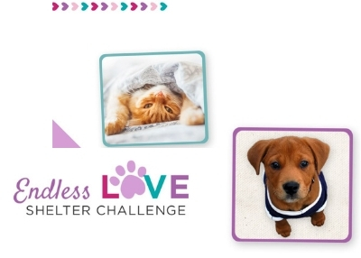 Houston Humane Society - Endless Love Shelter Challenge