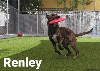 Houston Humane Society Happy Tail Renley
