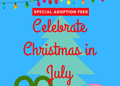 Houston Humane Society - Christmas in July