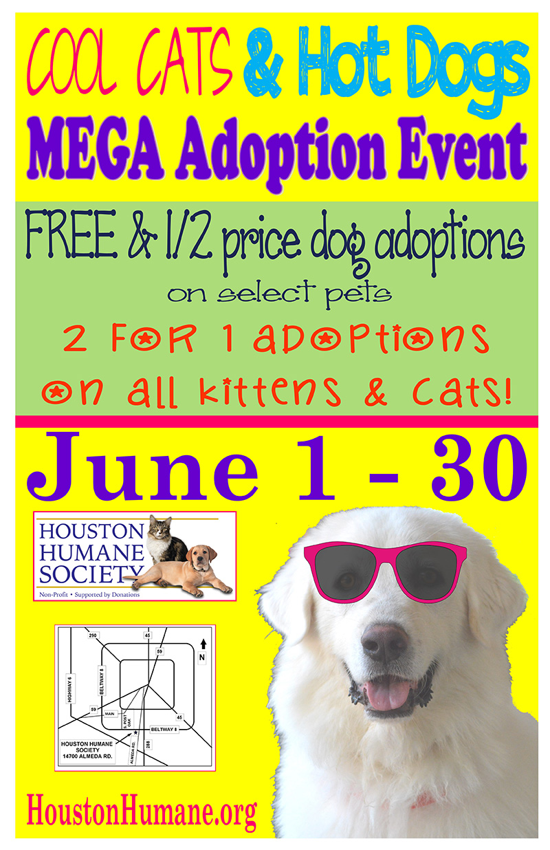 june-adoption-special
