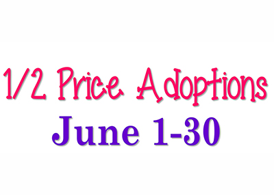 Houston Humane Society - June Adoption Promotion