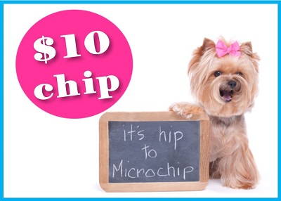 Houston Humane Society - Microchip Special