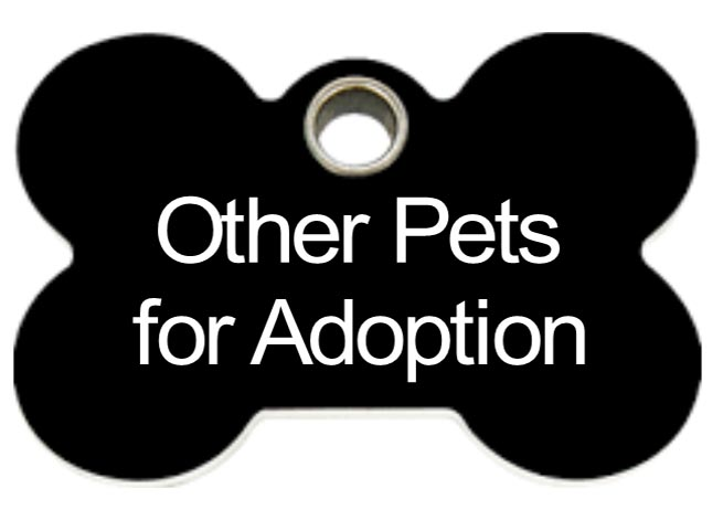 other-pets-for-adoption