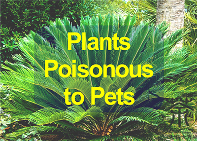 Houston Humane Society Plants Poisonous to Pets