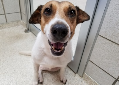 Houston Humane Society Herma