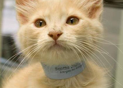 Houston Humane Society Scottie