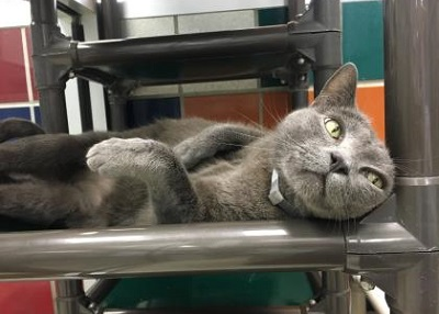 Houston Humane Society Smokey