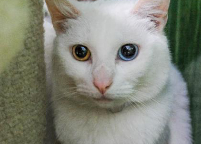 Houston Humane Society Snow White