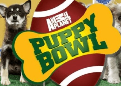 Houston Humane Society HHS pups part of Super Bowl Live!