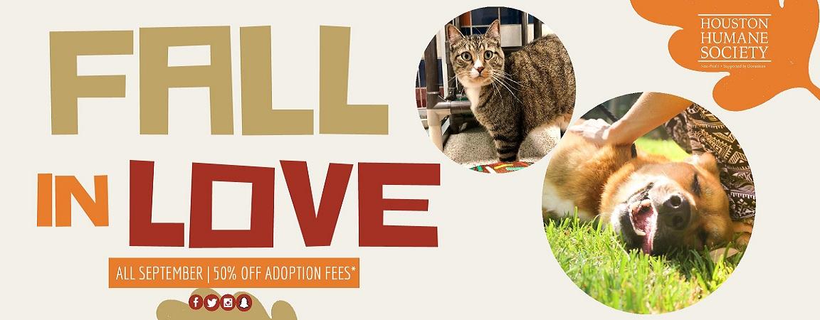 Houston Humane Society   Pet Rescue & Pet Adoption   Houston, TX