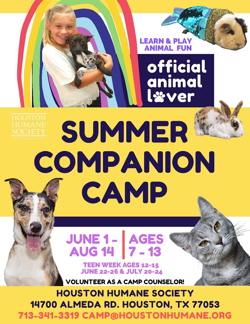 summer-companion-camp-flyer-2020