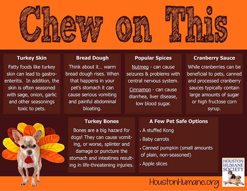 thanksgiving-food-graphic