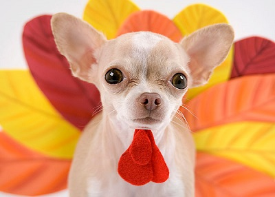 Houston Humane Society Turkey Day Tips