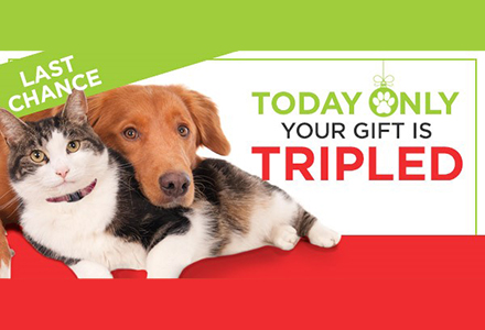 Triple Your Gift Houston Humane Society