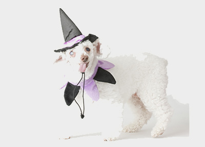 Houston Humane Society Halloween Tips