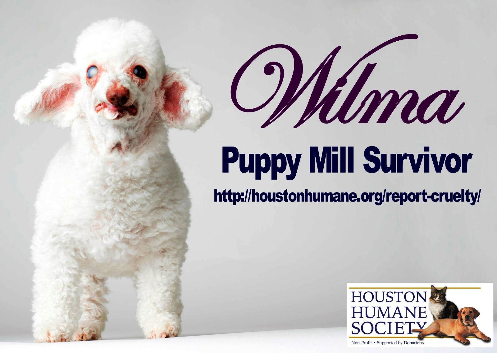Image of: Cats Wilma1 Rescue Dogs 101 Mascots Houston Humane Society Animal Shelter Adopt Dog