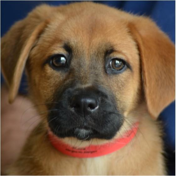Houston Humane Society Pet Rescue Pet Adoption Houston Tx